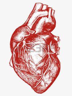 Menschliches Herz Zeichnung Linienarbeit Lizenzfreie Bilder
