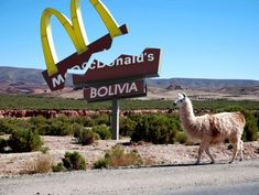 McDonald's Is Closing All Restaurants In Bolivia As The Nation Rejects Fast Food  - http://www.ecosnippets.com/food-drink/mcdonalds-closing-all-restaurants-in-bolivia/