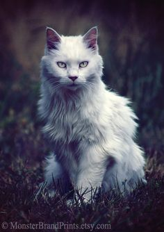 Guardian Cat Photography Animal Fine Art by MonsterBrandPrints