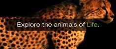 Animal Planet info about invertebrates