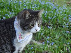 I want a kerchief wearing cat.
