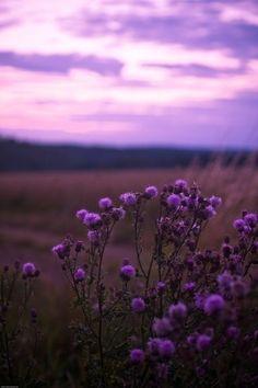 purple <3 by aurora