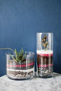 20 Ideas de terrarios DIY   Plantas