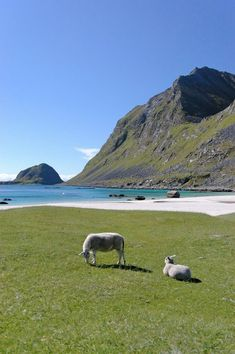 Hauklandsstranden – einer der schönsten Strände Norwegens! Wo? Weit im Norden, auf den Lofoten.  http://www.panoramio.com