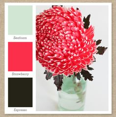 Color Palette I am digging. I would use dark     wood furniture to represent the espresso in the room. Seafoam; mint, green Strawberry; pink, fuschia Espresso; brown.
