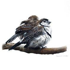 Bird Print bird art Finch print by RachelHollisArt on Etsy Australian Birds, Rustic Art, Polychromos, Bird Pictures, Wildlife Art, Bird Prints, Bird Art, Beautiful Paintings, Beautiful Birds