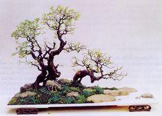 O Mestre do benjng- bonsai...        Mestre Zao é um Artista respeitado internacionalmente por suas composições de pais...