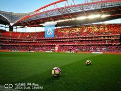 Estádio da Luz,  SL Benfica (@SLBenfica) | Twitter Soccer Stadium, Portugal, English, Twitter, Nice, Sports, Stadium Of Light, Canoeing, Volleyball