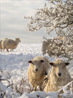 Linda Barker's picture of a snowy scene