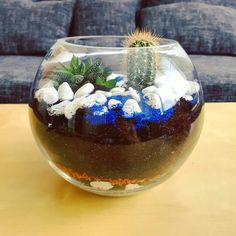 First terrarium completed   1. Layer of pebbles  2. Layer or active coal 3. Layer of plant granules  4. Layer of cactus soil 5. One succulent and one cactus carefully planted. 6. Decoration layer of pebbles and blue sand.