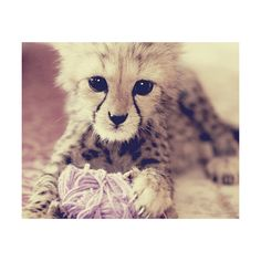 Baby-Leopard ❤ liked on Polyvore