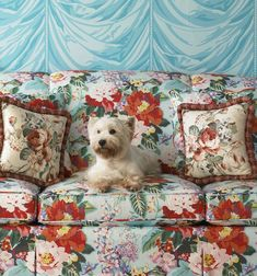 Westie and chintz