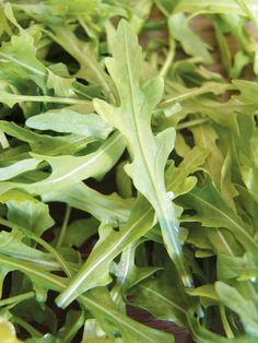 rucola http://www.pinterest.com/hannaharta/natural-remedies/