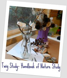 Twig Nature Study - winter trees using the Outdoor Hour Challenge. Teaching Science, Science For Kids, Science Nature, Teaching Ideas, Homeschool Coop, Homeschooling, Study Inspiration, Study Ideas, Tree Study