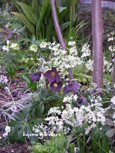 キヨミのガーデニングブログ Summer Garden, Garden Furniture, Green, Flowers, Plants, Image, Gardening, Cover, Kitchen