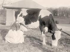 Milking a cow -- I watched my grandmother do this in Blairsville, GA