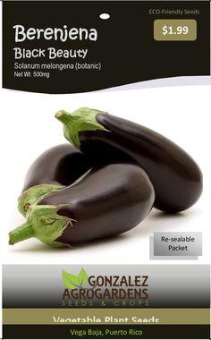 Black Beauty Eggplant Solanum Melongena Berenjena Negra 100 Seeds