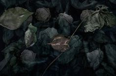 TINE POPPE PHOTOGRAPHY Not Dark Yet, International Photography Awards, Insect Species, Social Challenges, Paris 2015, Create Picture, Dark Flowers, Still Life Art, Taking Pictures