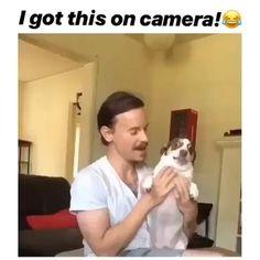 Funny Animal Jokes, Funny Video Memes, Funny Dog Videos, Stupid Funny Memes, Cute Funny Animals, Funny Animal Pictures, Cute Baby Animals, Funny Cute, Cute Dog Memes