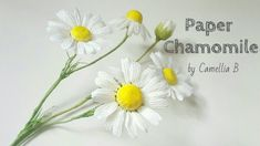 DIY- Paper Chamomile daisy- like flower frome crepe paper- Cúc La Mã giấ...