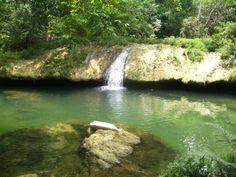 Selva Tuxtepec Oaxaca
