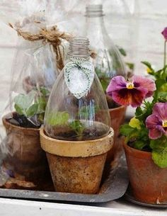 How to make the small greenhouse? There are some tempting seven basic steps to make the small greenhouse to beautify your garden. Best Greenhouse, Indoor Greenhouse, Greenhouse Gardening, Indoor Garden, Container Gardening, Indoor Plants, Outdoor Gardens, Greenhouse Ideas, Edible Garden