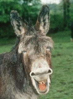 Fabel von Aesop: Der Esel, der Rabe und der Hirte - Hilfe oder Hohn