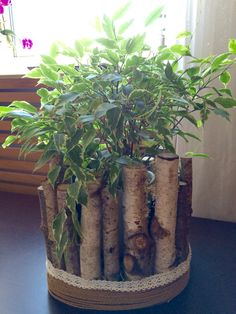 Übertopf für Zimmerpflanze, gefertigt aus Stöcken und Zweigen. Deko aus Birkenzweige
