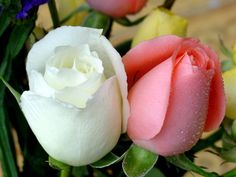 Roses for dear friends