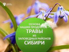 Магазин Сибирское здоровье