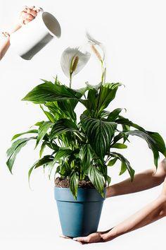 Plantas para ambientes internos  #Arranjosdeflores #décor #Decoração #Flores