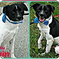 Adopt A Pet :: Alvin - Fairfield, OH