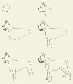 step by step drawing Puppies | how to draw boxer How to draw Boxer