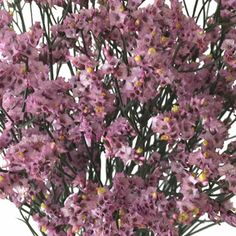 FiftyFlowers.com - Pink Limonium Flowers