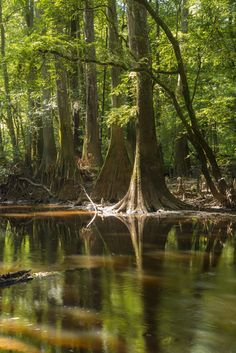 Share the Experience | Congaree National park