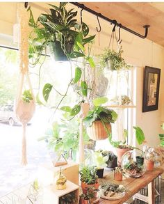 window rod plants