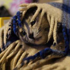 #cat #cool #cute #nice #animal #funnycat #awesome #photo #beautiful #nice #photooftheday