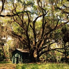 Darkroom on Ossabaw Island.  Built by Mark Frissell for Pigs Fly and company.