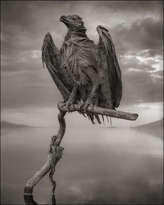 Calcified Fish Eagle... Across the ravaged land by Nick Brandt