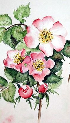"""""""Wildrose"""" Painting by Maria Inhoven buy now as poster, art print and greeting card. Watercolor Cards, Watercolour Painting, Watercolor Flowers, Painting & Drawing, Watercolors, Botanical Illustration, Botanical Prints, Guache, Thread Painting"""