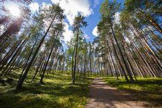 Rokua National Park Finland [OC] [1920x1080]