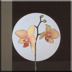 """Robert Mapplethorpe STRETCHED CANVAS Art 24x32 """"Orchids, 1988"""""""