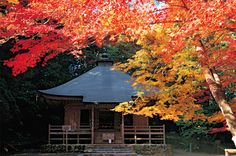 #japan #iwate #worldheritage #hiraizumi
