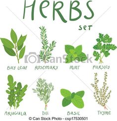 Vector - Set of 8 vector herbs - stock illustration, royalty free illustrations, stock clip art icon, stock clipart icons, logo, line art, EPS picture, pictures, graphic, graphics, drawing, drawings, vector image, artwork, EPS vector art