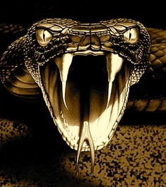 1000+ images about Snake on Pinterest | Viper, Snakes and Hd wallpaper