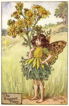 The Ragwort Fairy - by Cicely Mary Barker