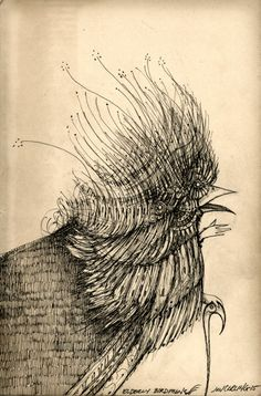 elderly birdman