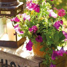 Crea un jardín en tu ventana