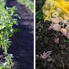 15 Organic DIY Garden Fertilizer Recipes That'll Beautify Your Garden Garden Soil, Garden Plants, Indoor Plants, Starting A Vegetable Garden, Home Vegetable Garden, Roots Book, Acid Loving Plants, Vinegar Uses, Natural Beauty Recipes