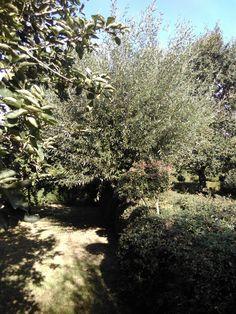 Chambre des Fruits - Saule têtard et Aubépine